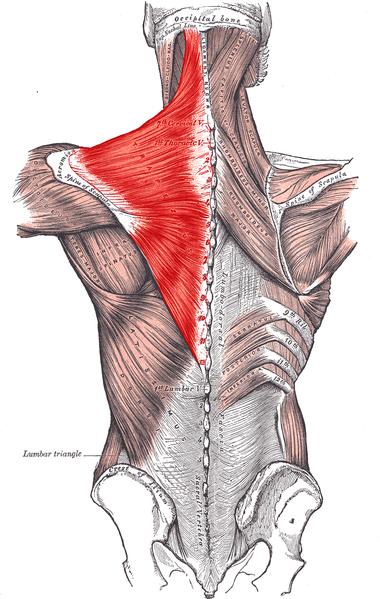Nackenverspannung Übung Kapuzenmuskel