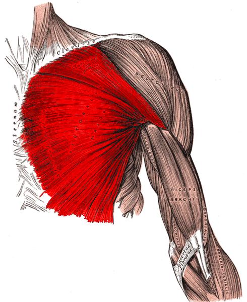 Brustmuskelübung
